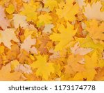abstract autumnal background ... | Shutterstock . vector #1173174778