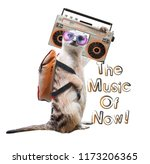 cute meerkat listening to a... | Shutterstock . vector #1173206365