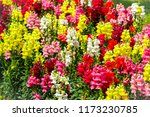 The Colorful Flowers Field ...