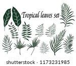 tropical leaves set. vector... | Shutterstock .eps vector #1173231985
