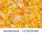 abstract autumnal background ... | Shutterstock . vector #1173232285