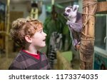 Boy And Lemur At The Zoo
