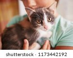 Stock photo little boy holds black and white kitty on his shoulder 1173442192