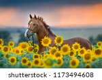 Stock photo red stallion in bridle portrait in sunflowers 1173494608