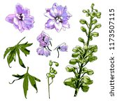 delphinium vector illustrations | Shutterstock .eps vector #1173507115