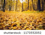 golden autumnal forest with... | Shutterstock . vector #1173552052