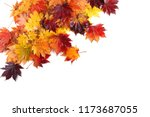 autumn maple leaves | Shutterstock . vector #1173687055