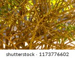 entwined twigs within a... | Shutterstock . vector #1173776602