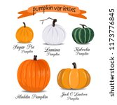 pumpkin vector varieties | Shutterstock .eps vector #1173776845