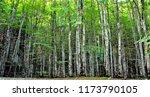 in a beech forest in the summer | Shutterstock . vector #1173790105