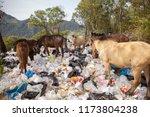 chiangmai thailand   january 9... | Shutterstock . vector #1173804238