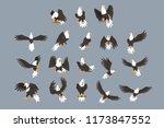 bald eagle image set on grey... | Shutterstock .eps vector #1173847552