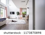 grey cat on carpet in spacious... | Shutterstock . vector #1173870898