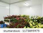flowers in the big cold storage ... | Shutterstock . vector #1173895975