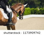 dressage competition  bay horse ... | Shutterstock . vector #1173909742