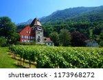 house with vineyard....   Shutterstock . vector #1173968272