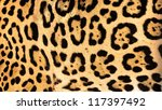 Real Live Jaguar Skin Fur...