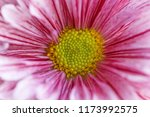 close up of purple... | Shutterstock . vector #1173992575