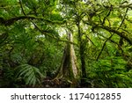 lush undergrowth jungle...   Shutterstock . vector #1174012855