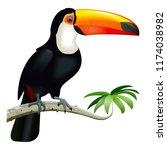 vector toucan with orange beak... | Shutterstock .eps vector #1174038982