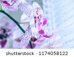 flower of orchid against a... | Shutterstock . vector #1174058122