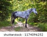 arabian stallion in the spring... | Shutterstock . vector #1174096252