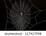 frozen spider web against black ... | Shutterstock . vector #117417958