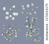 vector baby's breath flowers | Shutterstock .eps vector #1174212175