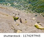 two seagulls on the beach. | Shutterstock . vector #1174297945