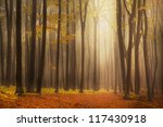 Autumn Landscape In A Foggy...