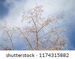 winter city park.tree branches... | Shutterstock . vector #1174315882