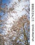 winter city park.tree branches... | Shutterstock . vector #1174315888
