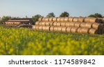 hay bales  straw rolls  on a... | Shutterstock . vector #1174589842