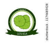 gotu kola. plant. leaves  stem. ... | Shutterstock . vector #1174685428