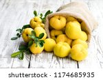 fresh  quince fruits on white... | Shutterstock . vector #1174685935