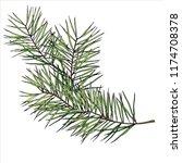 fir branch  vector isolated... | Shutterstock .eps vector #1174708378