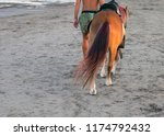 the guy leads the horse along... | Shutterstock . vector #1174792432