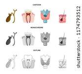 vector illustration of body and ... | Shutterstock .eps vector #1174793512