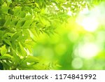 green leaves pattern for summer ... | Shutterstock . vector #1174841992