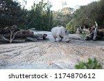 rhinoceros  'rhino'  is one of... | Shutterstock . vector #1174870612