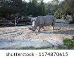 rhinoceros  'rhino'  is one of... | Shutterstock . vector #1174870615