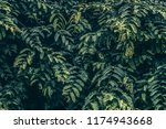 leave wall to background. retro ... | Shutterstock . vector #1174943668