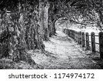 alley of sycamore trees and... | Shutterstock . vector #1174974172