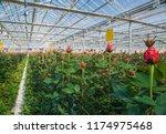 large industrial greenhouse... | Shutterstock . vector #1174975468