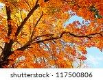Beautiful  Sunny Autumn In The...