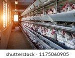 modern farm for growing hens... | Shutterstock . vector #1175060905