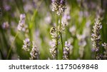 bumble bee playing in the... | Shutterstock . vector #1175069848