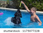 the boy play with dog in the... | Shutterstock . vector #1175077228