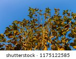 the branches of tree stand...   Shutterstock . vector #1175122585