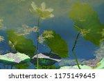 south korea summer pond lotus | Shutterstock . vector #1175149645